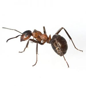 Common Florida Insects & Pests | Well's Termite & Pest Control